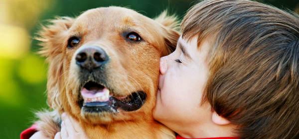 Пес и мальчуган