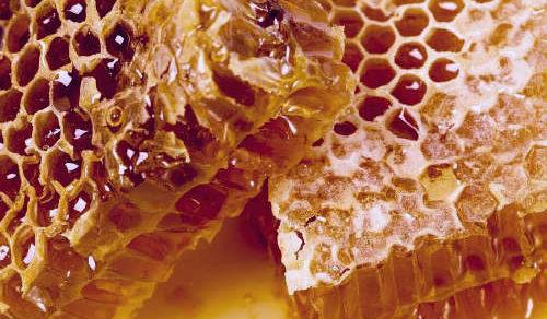 соты с мёдом