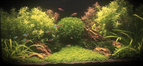 Аквариум зеленый