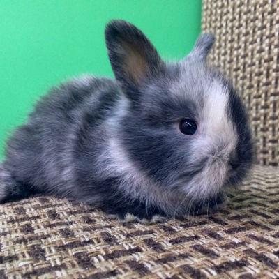 домашний кролик сидит