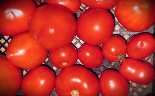 помидоры приготовление