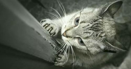 точит когти о дверной косяк