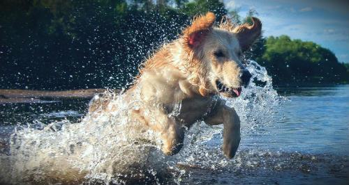 пес резвится в водоеме