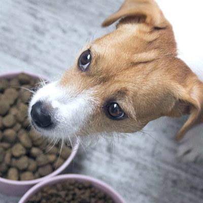 щенок и корм