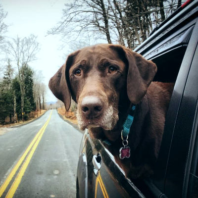 Собака в дороге