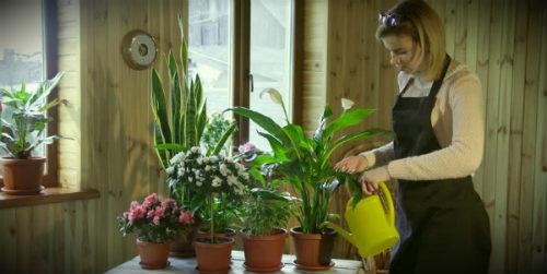 девушка поливает цветы дома