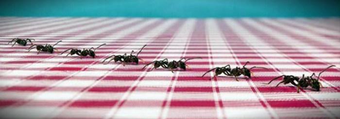 муравьи идут друг за другом